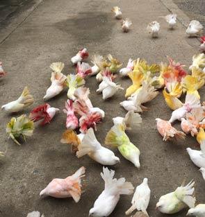 oiseaux parc koh Samui