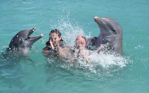 parc Dolphin Island Park